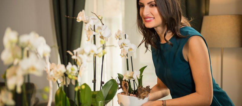De azi, LEROY MERLIN va asteapta cu zeci de sortimente de flori la ghiveci, plante verzi, orhidee si cadouri florale speciale