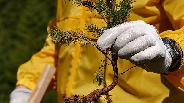 Bergenbier continuă răcorirea și plantează încă 50.000 de brazi
